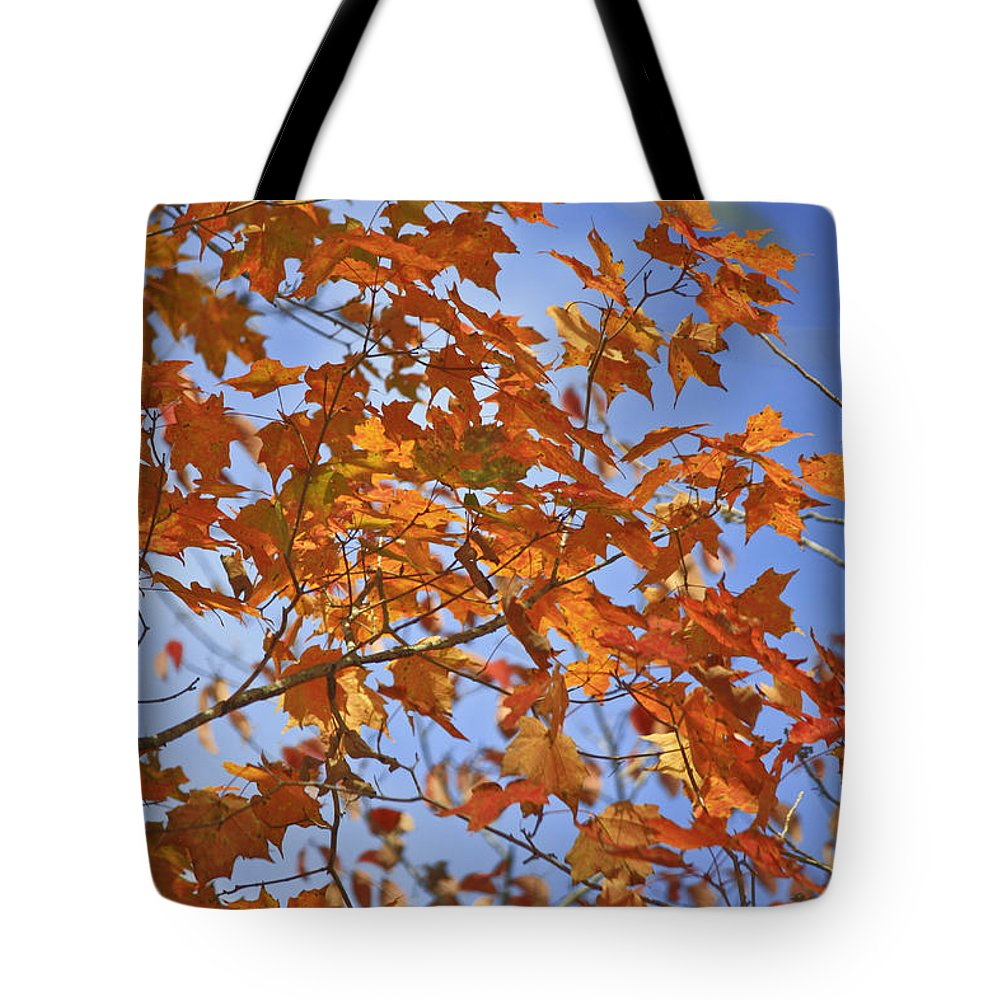 Fall Tote Bag featuring the photograph The Color Of Fall 2 by Teresa Mucha
