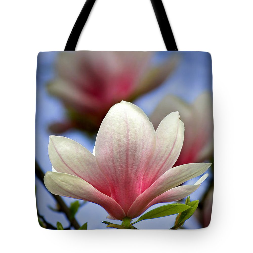 Magnolia Tote Bag featuring the photograph The Color Of Spring by Evelina Kremsdorf