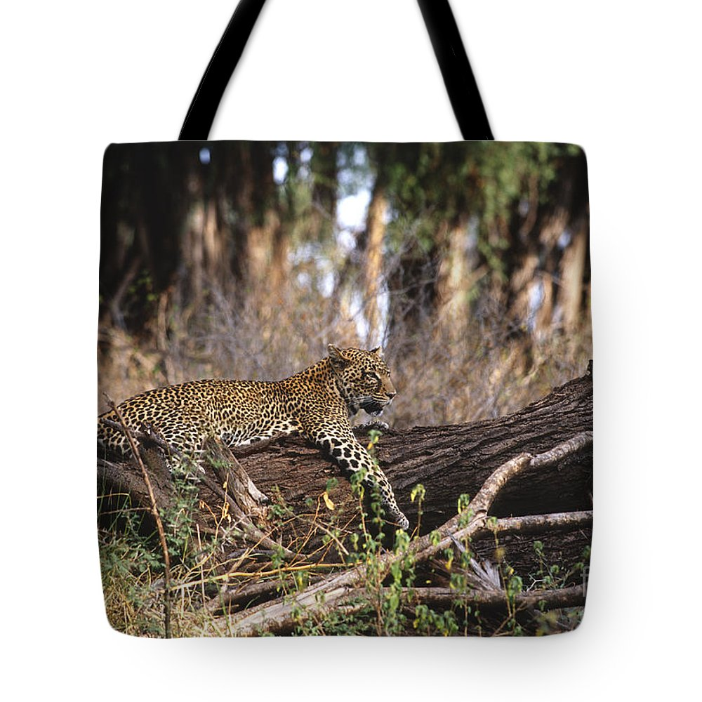 Africa Tote Bag featuring the photograph The Elusive Leopard by Sandra Bronstein