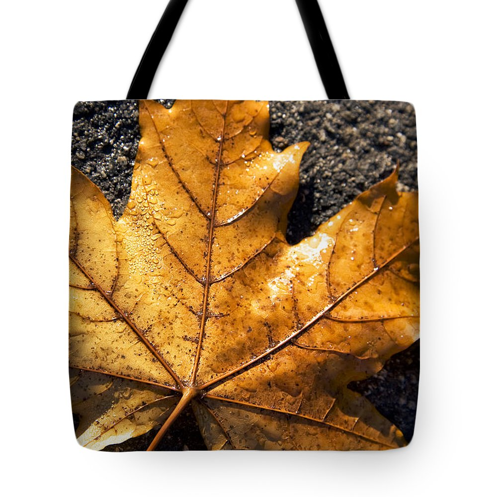 Autumn Tote Bag featuring the photograph The Fall Of Autumn by Jorgo Photography - Wall Art Gallery