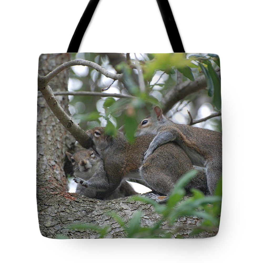 Squirrels Tote Bag featuring the photograph The Fight For Life by Rob Hans