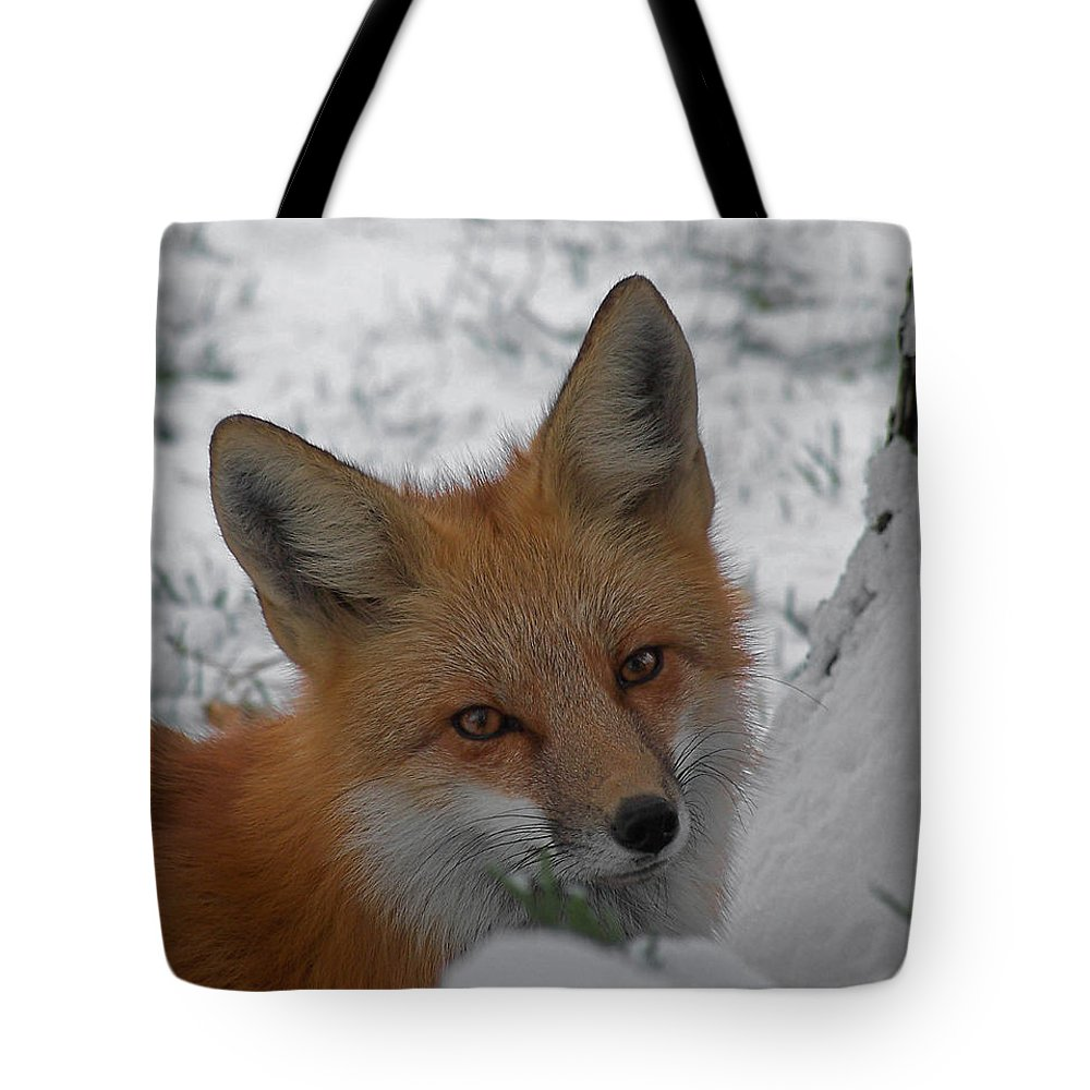 Red Fox Tote Bag featuring the photograph The Fox 4 by Ernie Echols