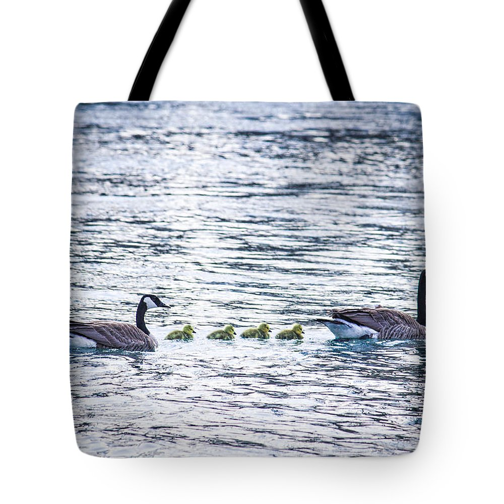 Birds Tote Bag featuring the photograph The Goose Family by Ananta Patel