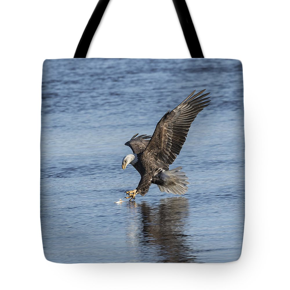American Bald Eagle Tote Bag featuring the photograph The Great American Bald Eagle 2016-8 by Thomas Young