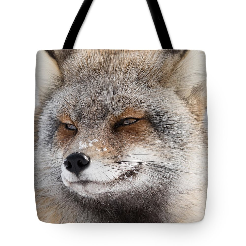 Red Fox Tote Bag featuring the photograph The Handsome Cross Fox Male by Yeates Photography