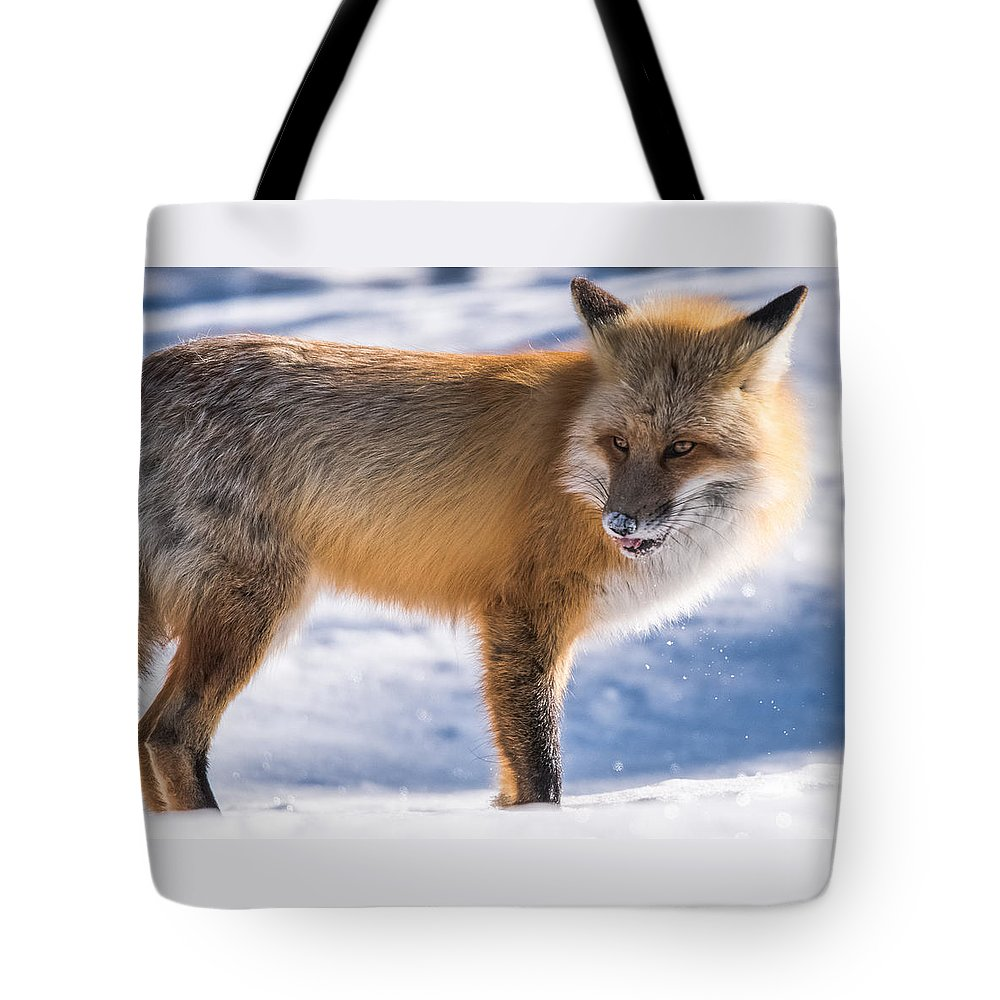 pretty Boy Tote Bag featuring the photograph The Handsome Hunter by Yeates Photography