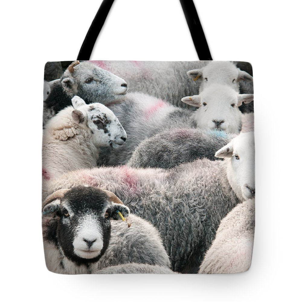 Buttermere Lake Tote Bag featuring the photograph The Herdwicks by Smart Aviation