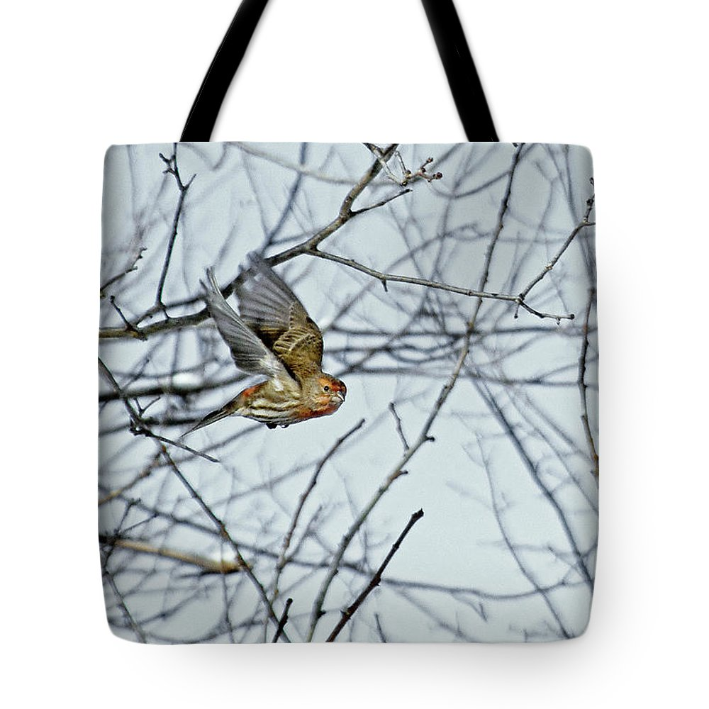 House Finch Tote Bag featuring the photograph The House Finch In-flight by Asbed Iskedjian