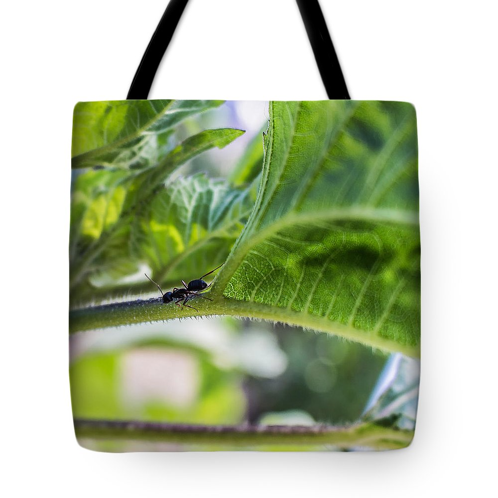Ants Tote Bag featuring the photograph The Lone Ant by Tammy Bryant