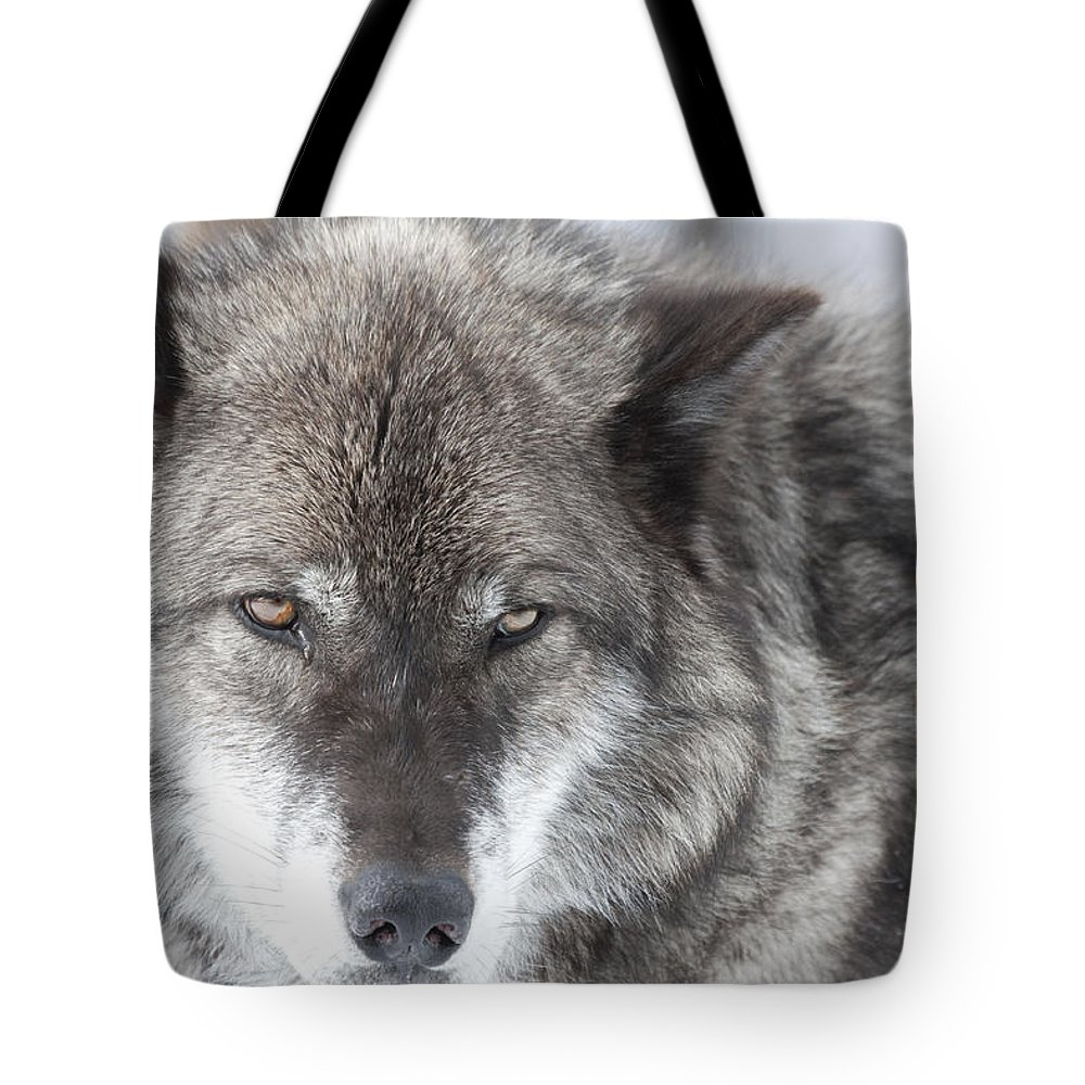 Wolf Tote Bag featuring the photograph The Look by Mary Haber