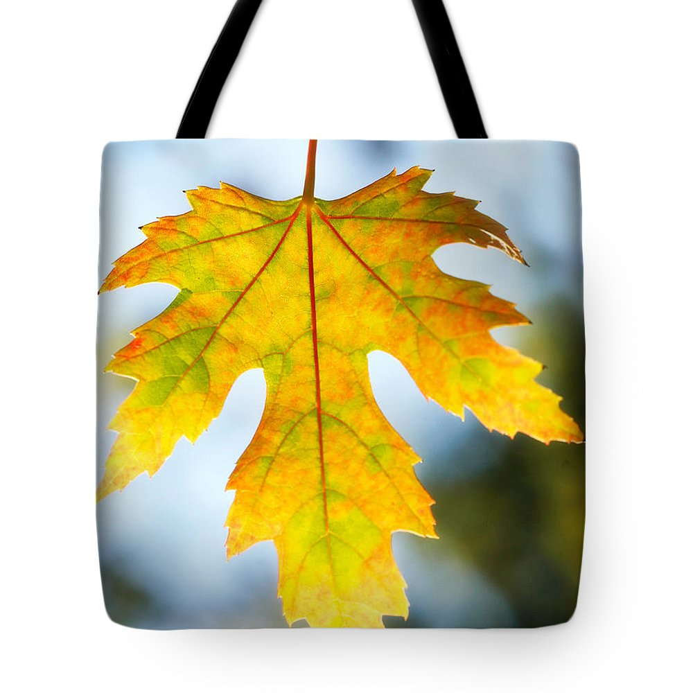 Maple Tote Bag featuring the photograph The Maple Leaf by Marilyn Hunt