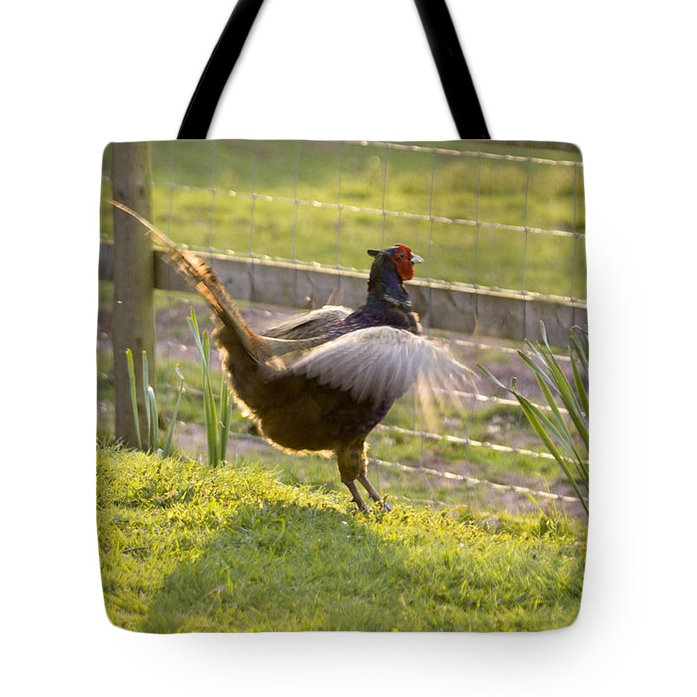 Pheasant Tote Bag featuring the photograph The Need Of Flying by Angel Ciesniarska
