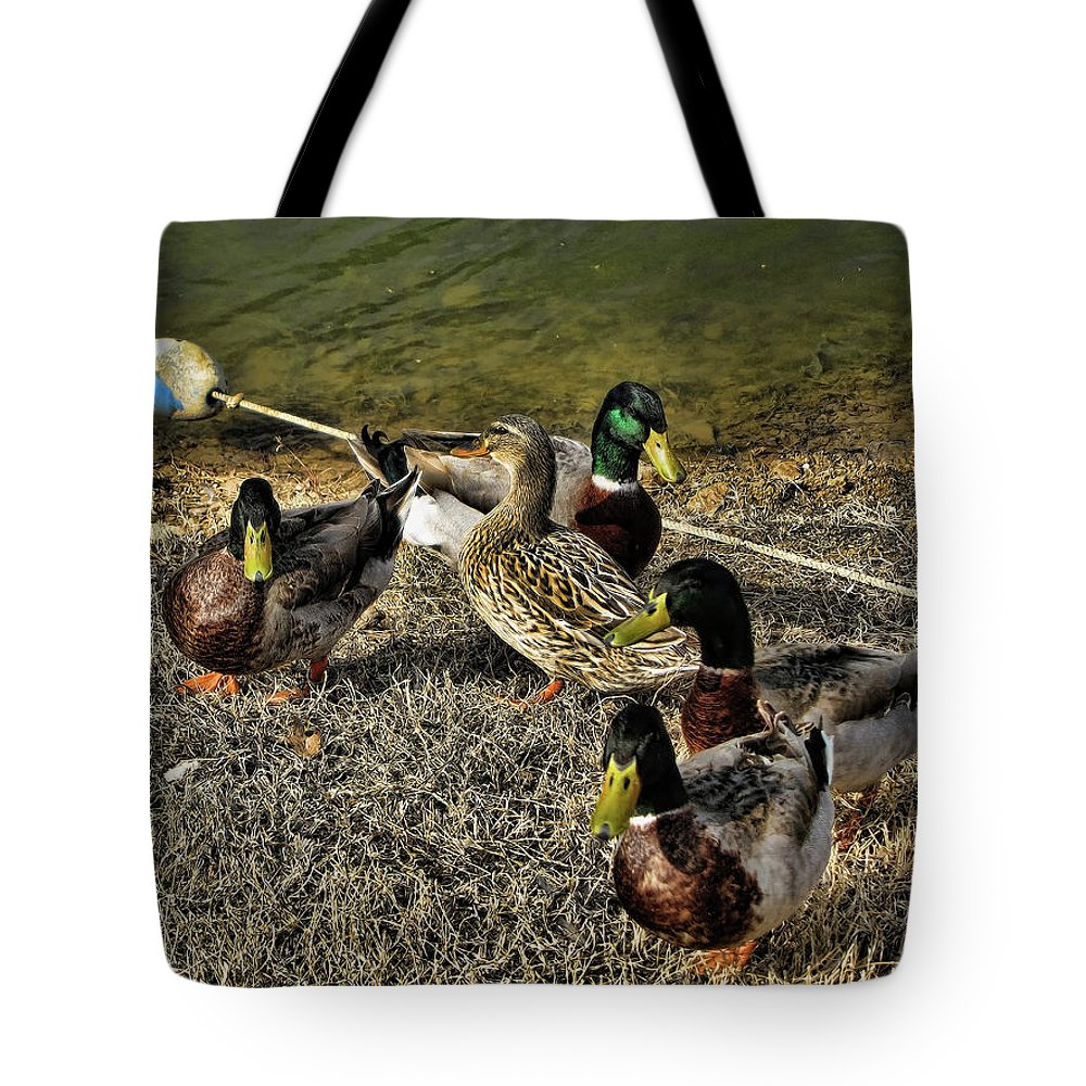 Mallard Ducks Tote Bag featuring the photograph The Odd One Out by Douglas Barnard