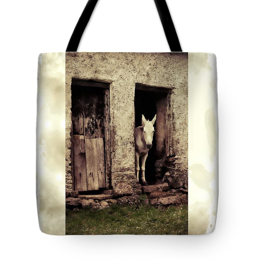 Mule Tote Bag featuring the photograph The Old Mule by Joe Cashin