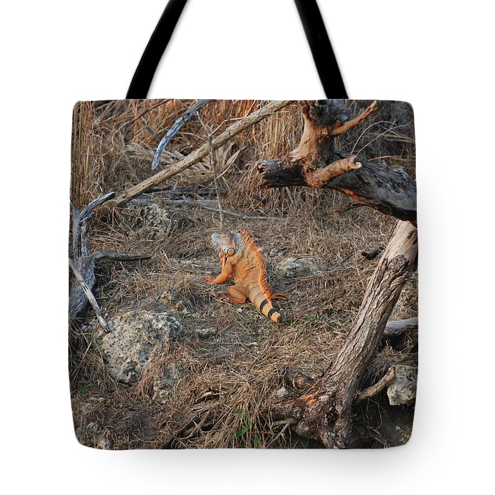 Branches Tote Bag featuring the photograph The Orange Iguana by Rob Hans