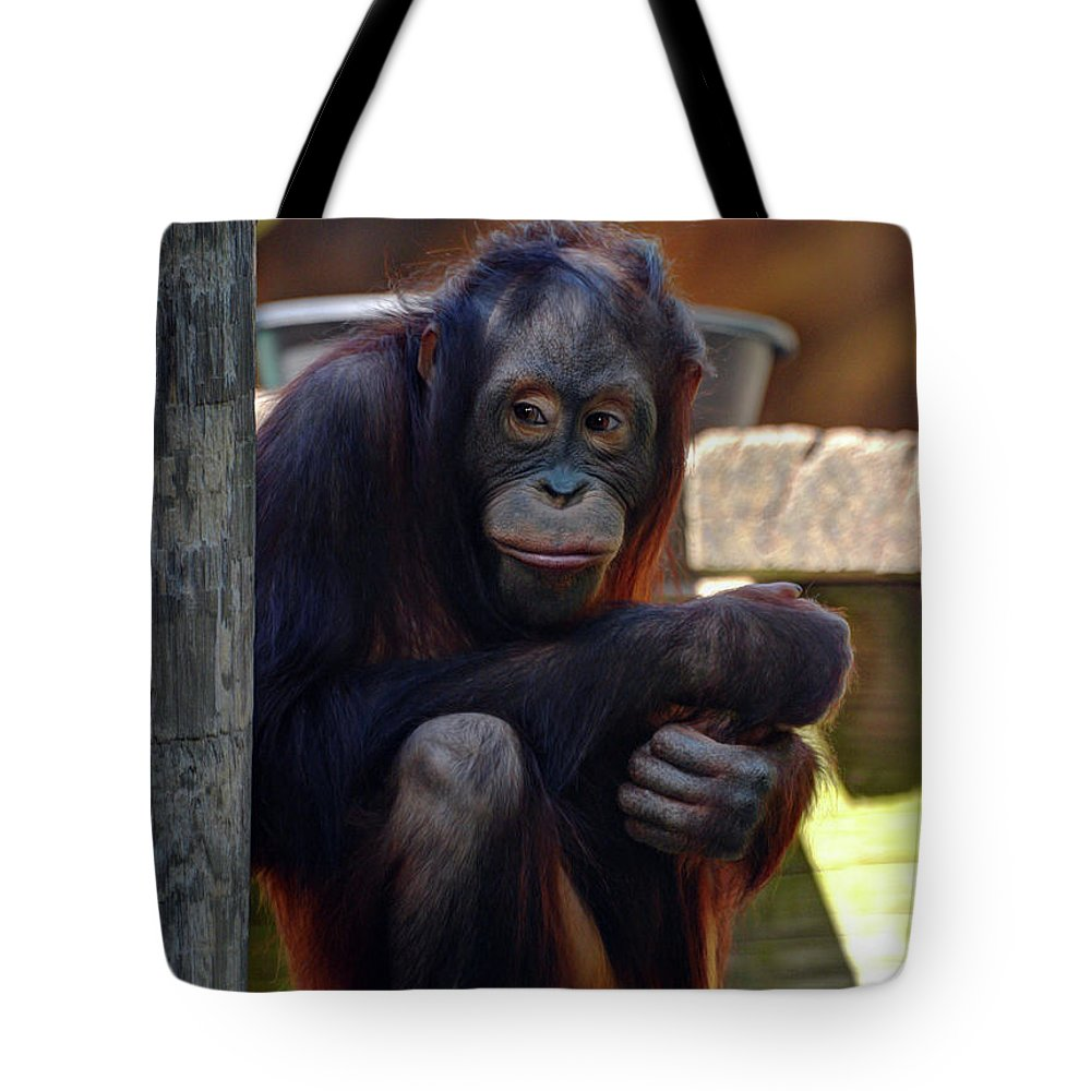 Orangutan Tote Bag featuring the photograph The Orangutan by Savannah Gibbs