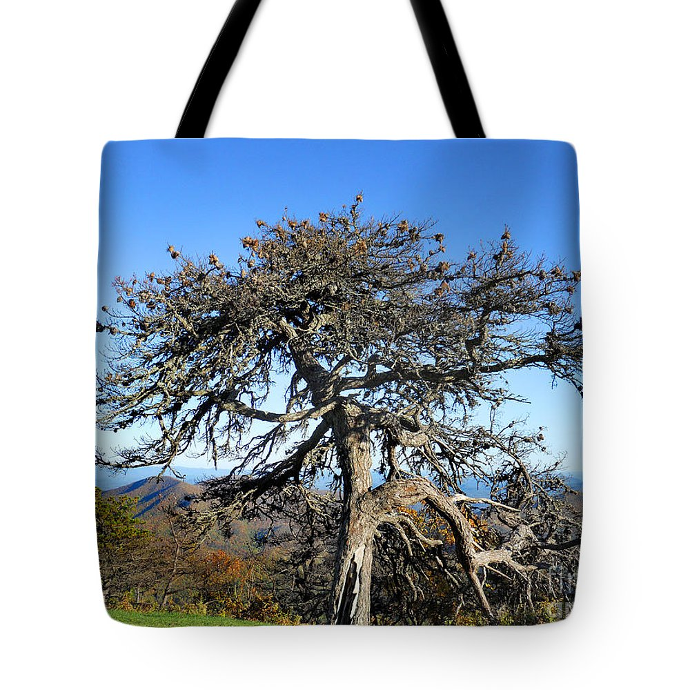 Scenic Tours Tote Bag featuring the photograph The Original Knarled by Skip Willits