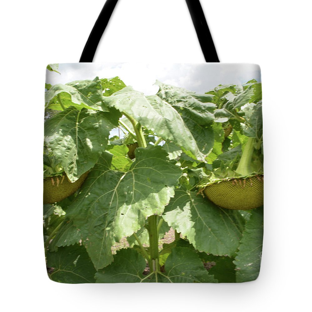 Sunflower Tote Bag featuring the photograph The Perfect Twin by To-Tam Gerwe