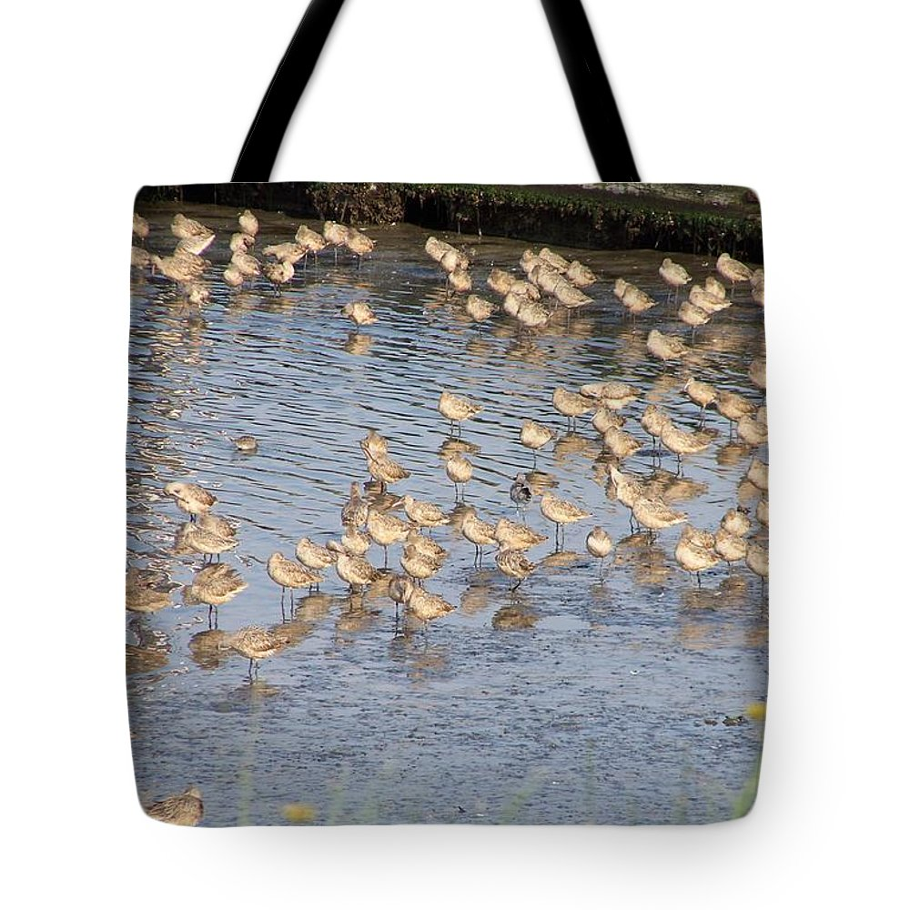 Seabirds Tote Bag featuring the photograph The Plovers by Laurie Kidd