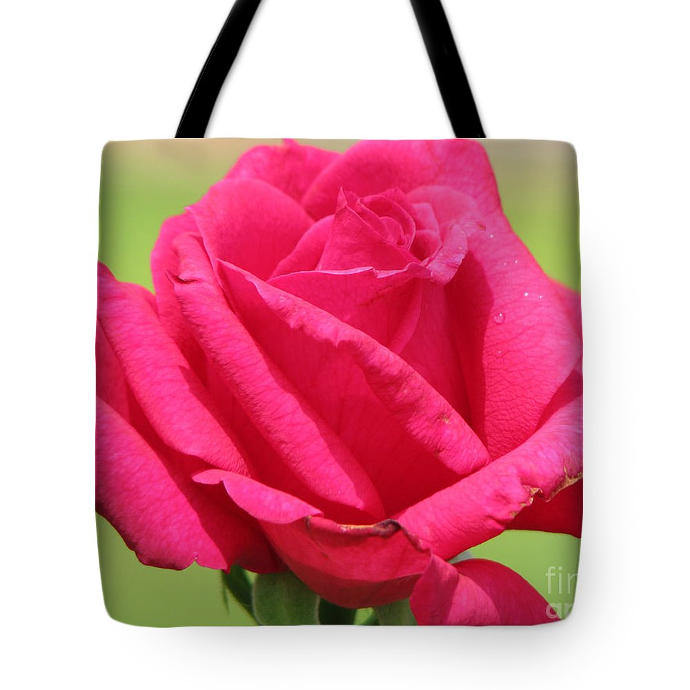 Roses Tote Bag featuring the photograph The Rose by Amanda Barcon