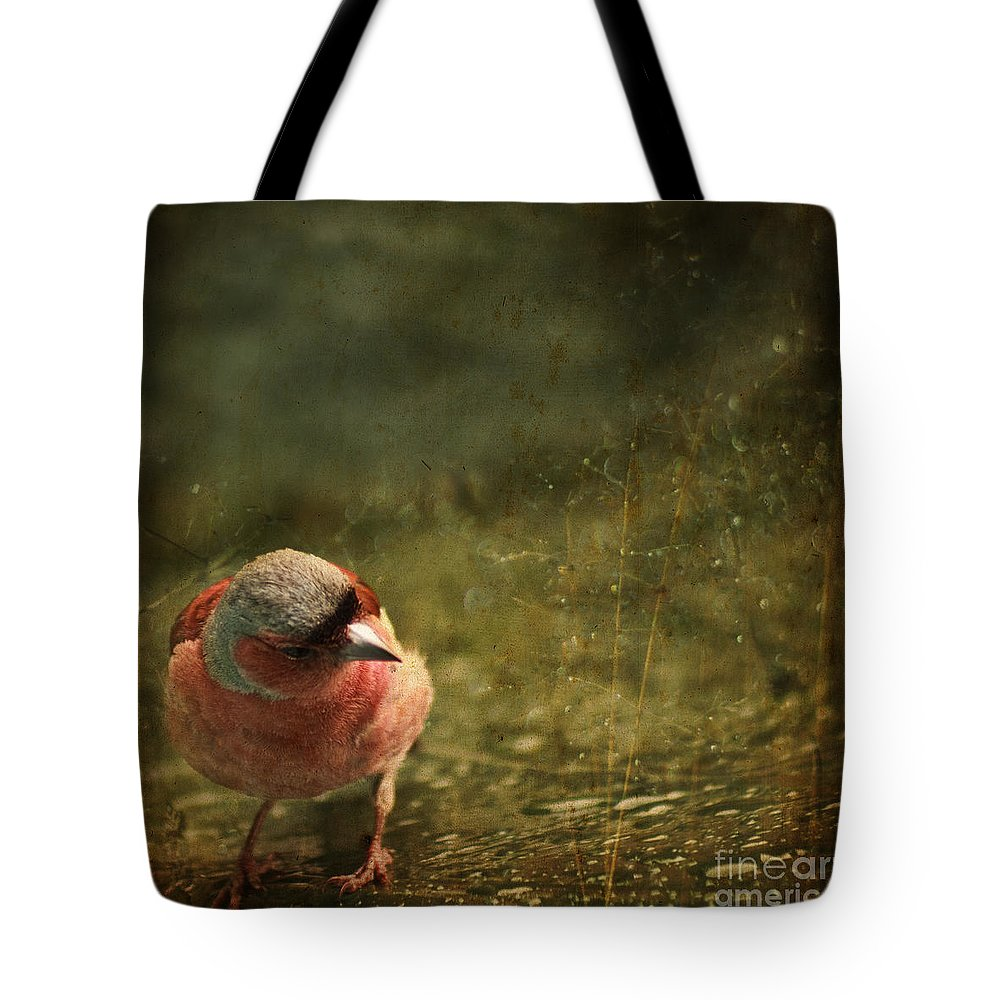 Chaffinch Tote Bag featuring the photograph The Sad Chaffinch by Angel Ciesniarska