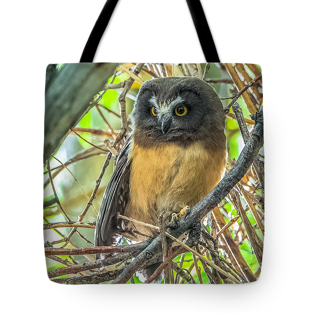 Owlet Tote Bag featuring the photograph The Savvy Saw-whet by Yeates Photography