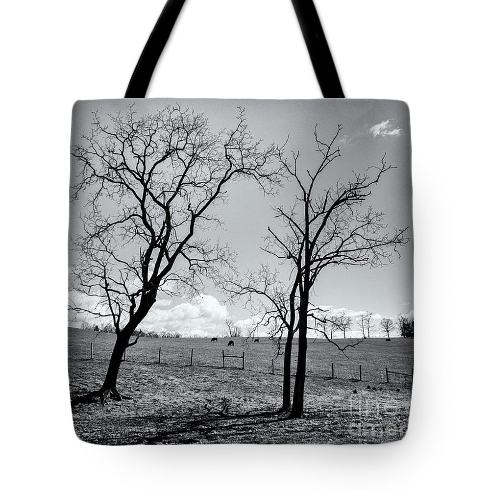 Tree Tote Bag featuring the photograph The Secret by Cara Walton