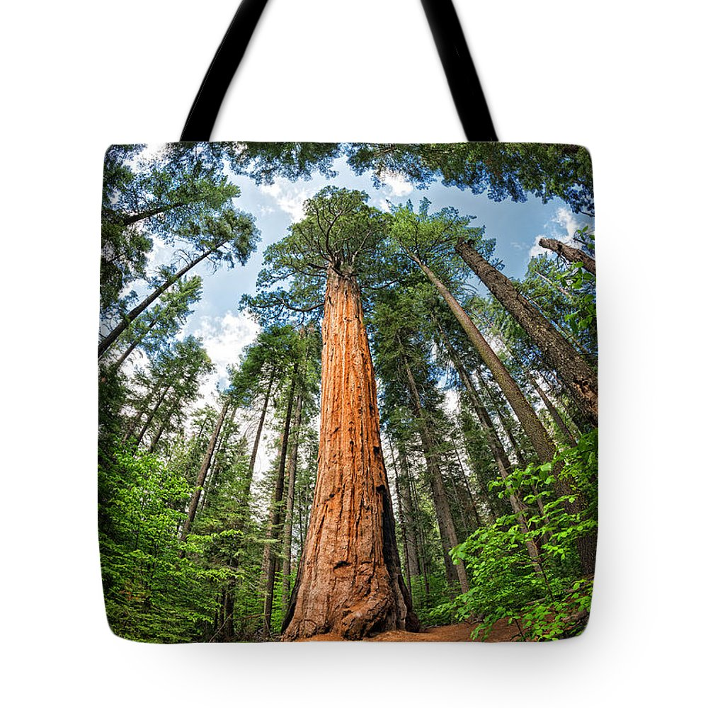 Trees Tote Bag featuring the photograph The Sky's The Limit by Dianne Phelps