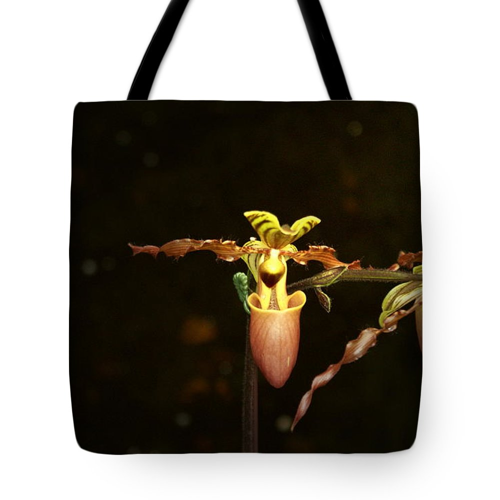 Lady Slipper Orchids Tote Bag featuring the photograph The Slippers by Joanne Smoley