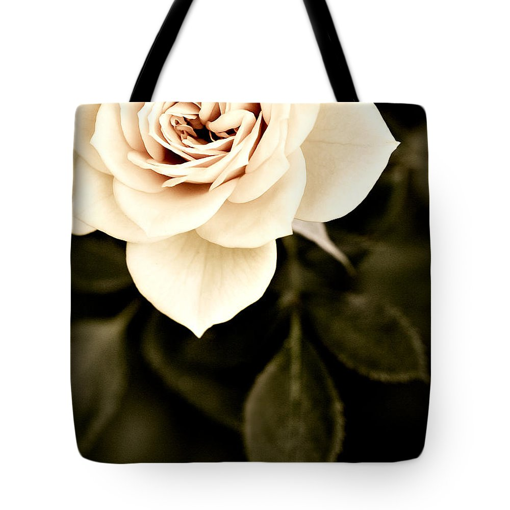 Rose Tote Bag featuring the photograph The Softest Rose by Marilyn Hunt