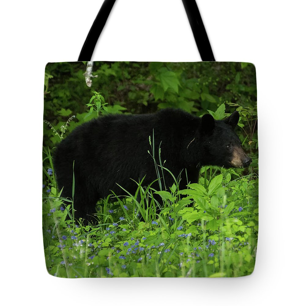 Bear Tote Bag featuring the photograph The Standoff by Jo Ann Gregg