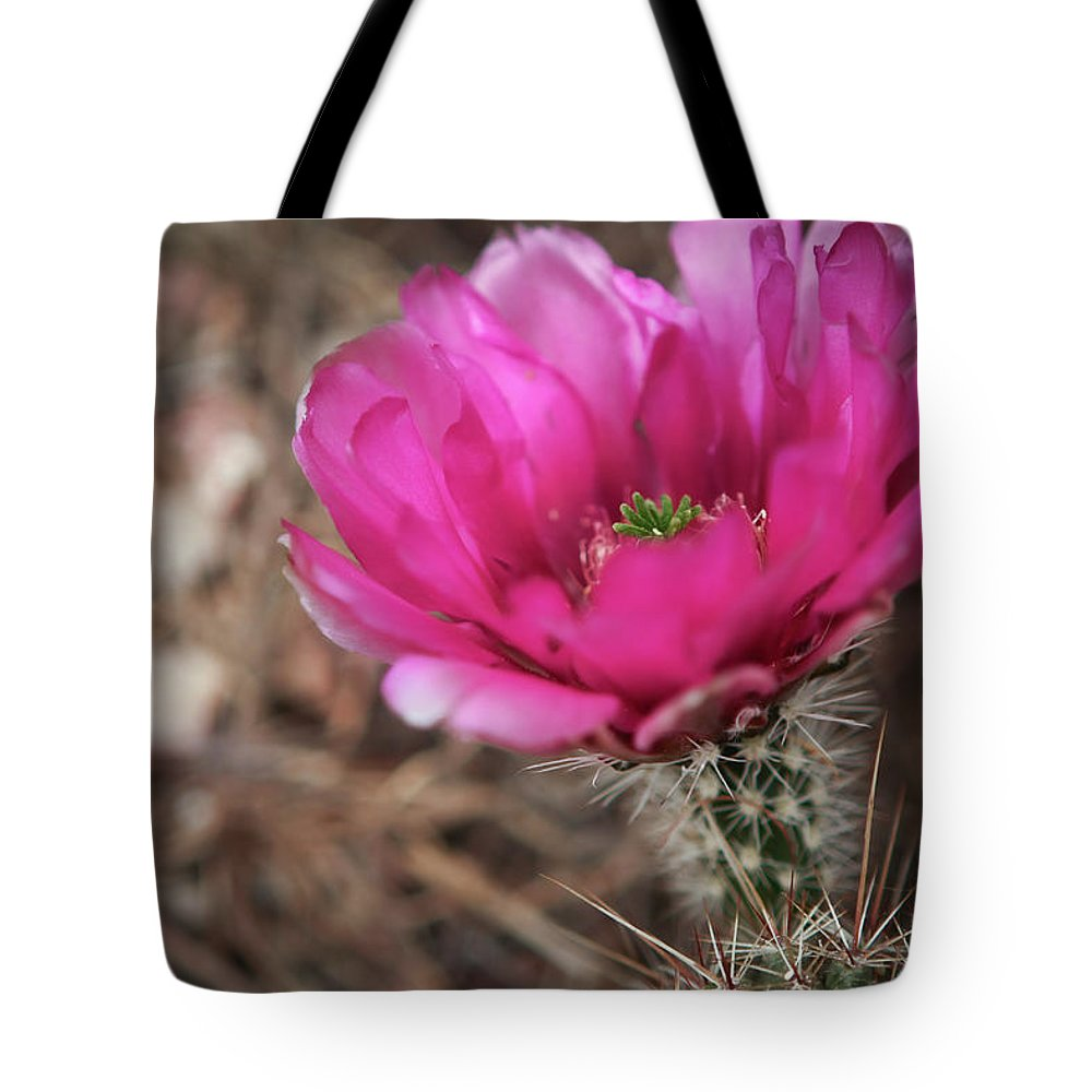 Cactus Tote Bag featuring the photograph The Stigma Of Beauty II by Martina Schneeberg-Chrisien