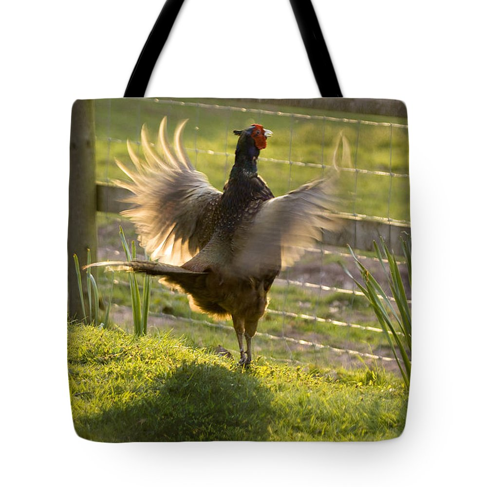 Pheasant Tote Bag featuring the photograph The Sun In My Wings by Angel Ciesniarska