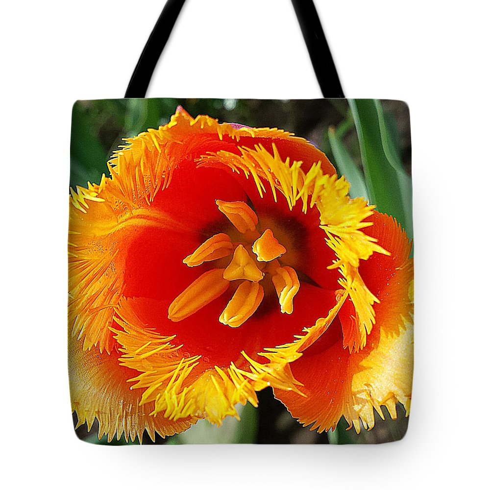 Tica Tote Bag featuring the photograph The Sun In You by Felicia Tica