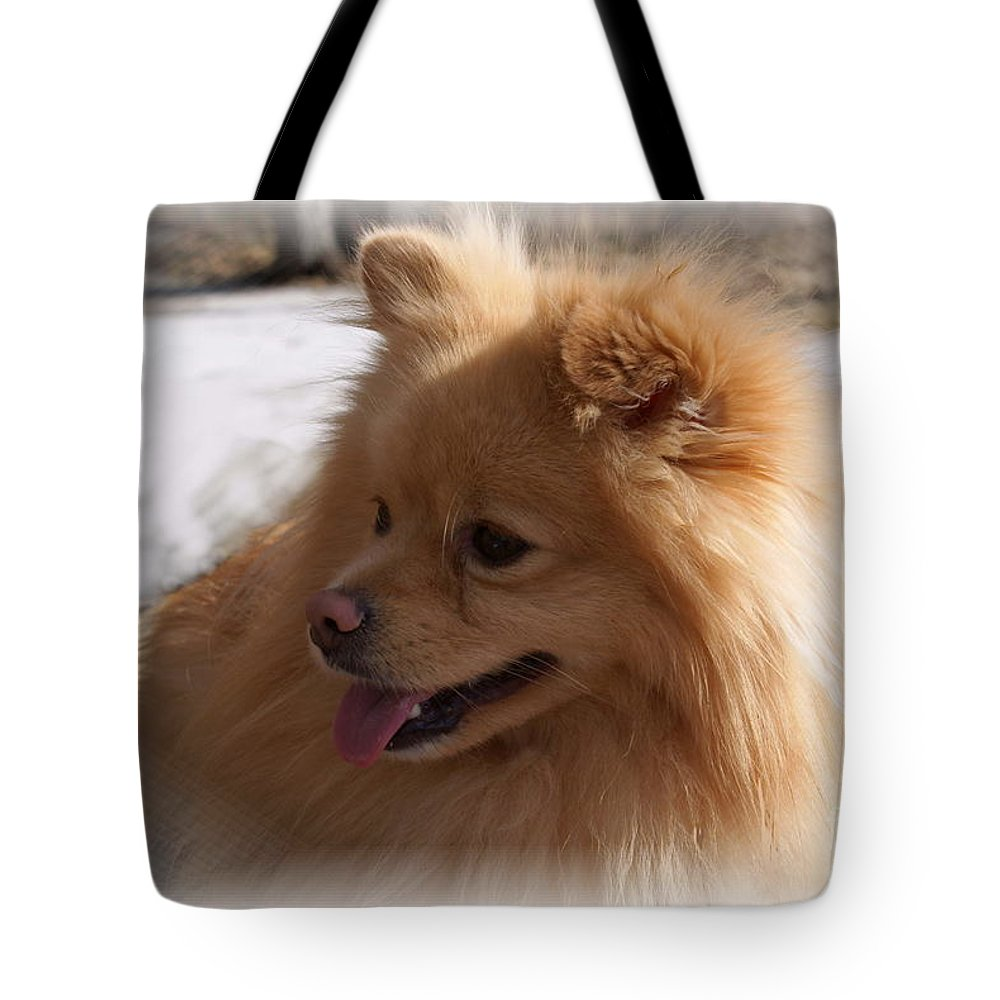 Pomeranian Dog Tote Bag featuring the photograph The Sun On My Back by Joanne Smoley