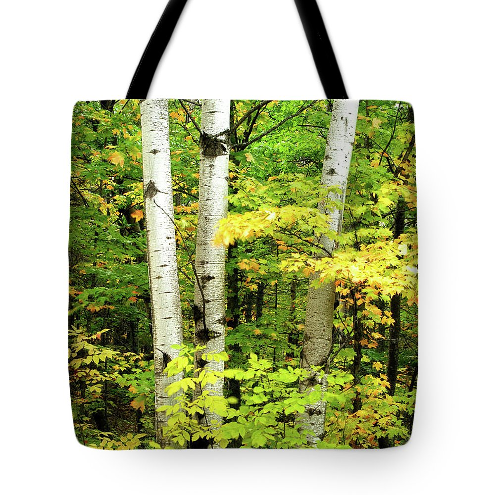 Birch Tote Bag featuring the photograph The Three Birch by Michael Peychich