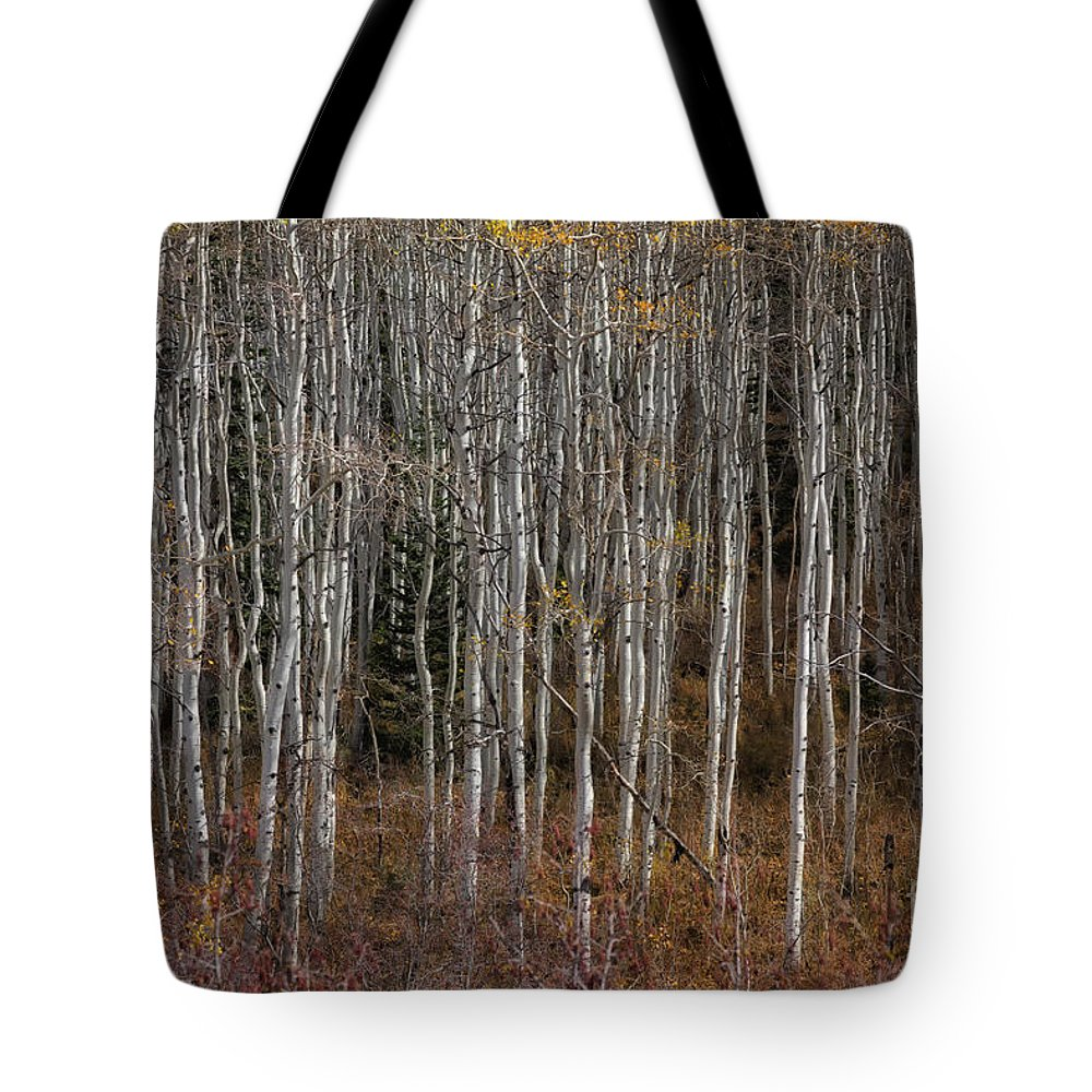 Usa Tote Bag featuring the photograph The Tight Aspens by Mitch Johanson