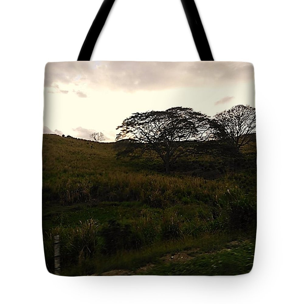 Photograph Tote Bag featuring the photograph The Tree by Pahola Baro Sfer