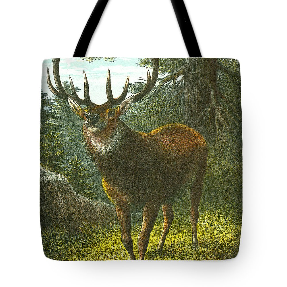 Buck Tote Bag featuring the painting The Wapiti by English School