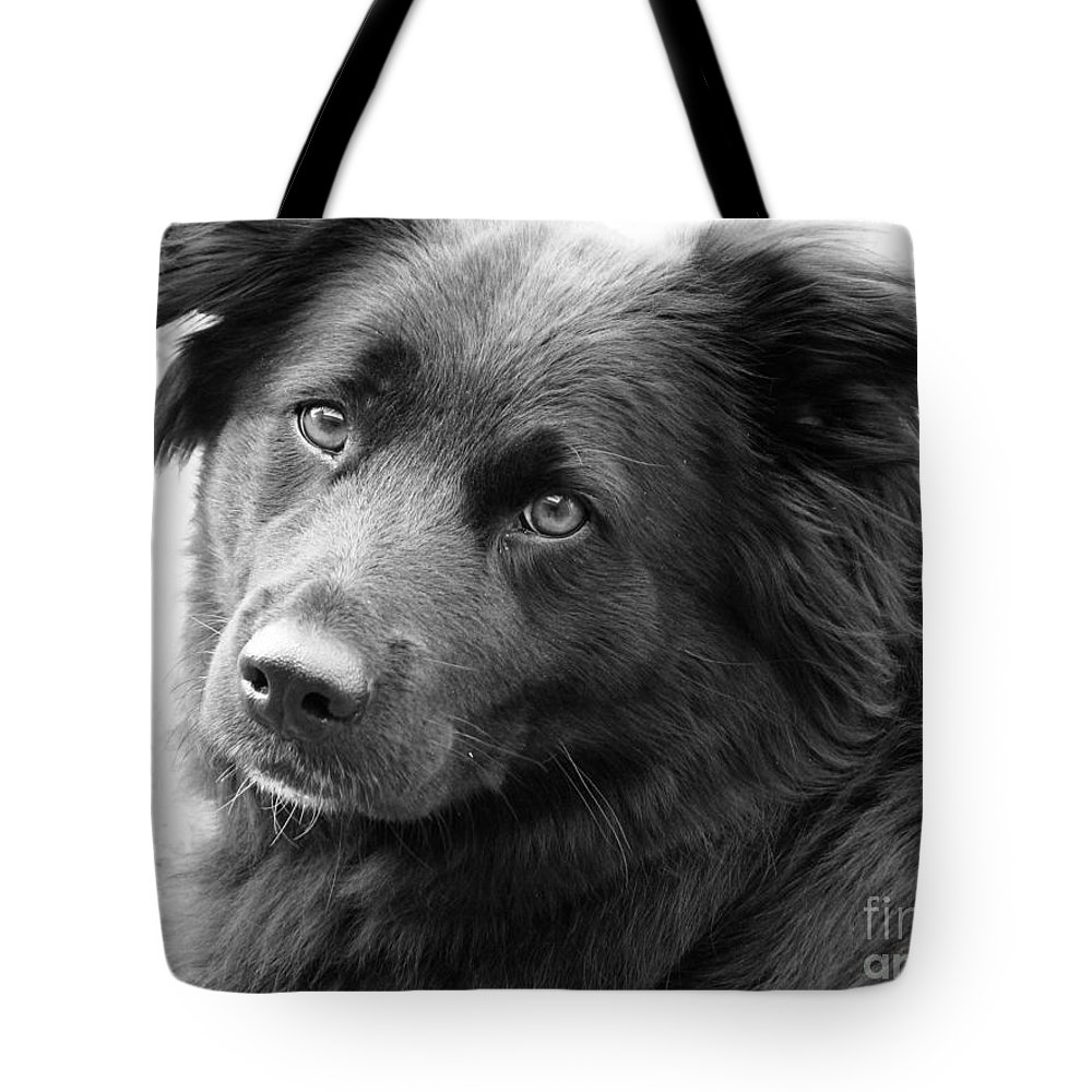 Dog Tote Bag featuring the photograph Thinking by Amanda Barcon