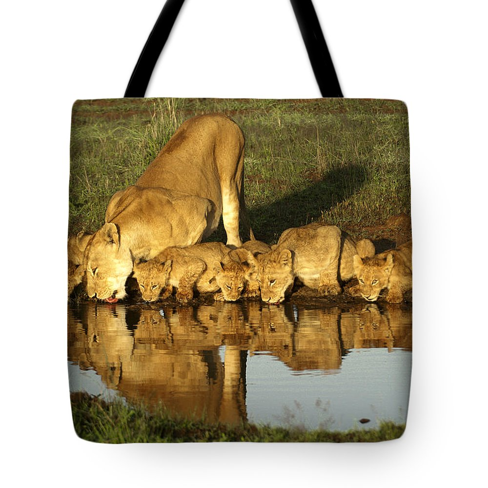 Lion Tote Bag featuring the photograph Thirsty Lions by Michele Burgess