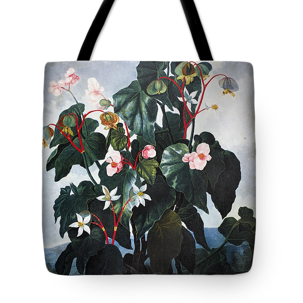 1800 Tote Bag featuring the photograph Thornton: Begonia by Granger