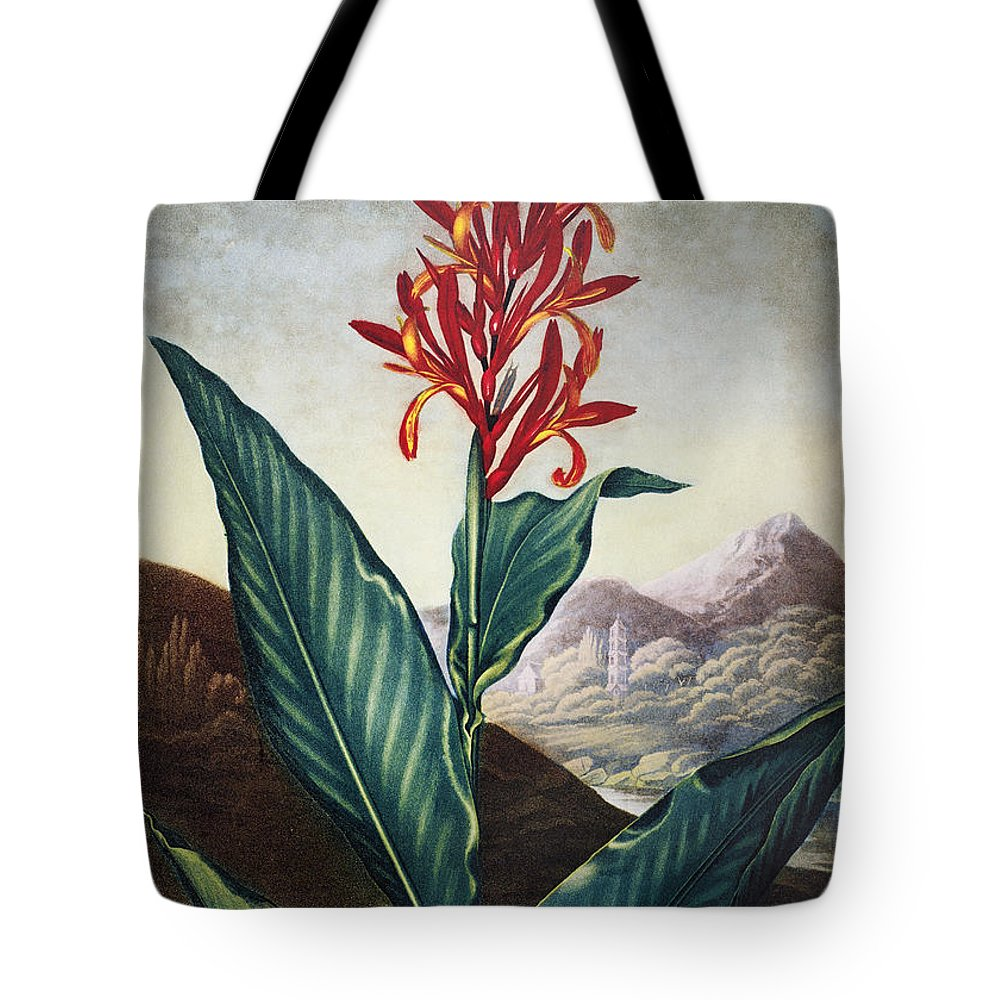1804 Tote Bag featuring the photograph Thornton: Indian Reed by Granger