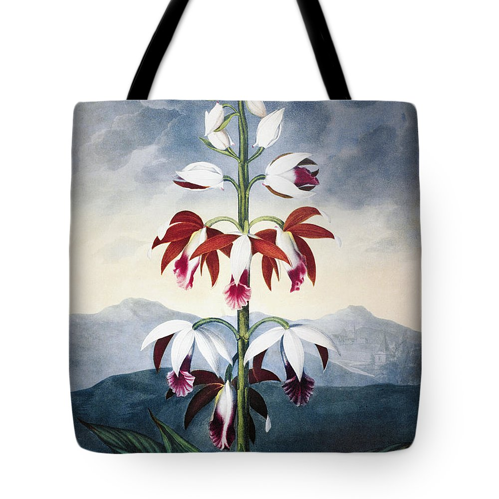 1802 Tote Bag featuring the photograph Thornton: Limodoron by Granger