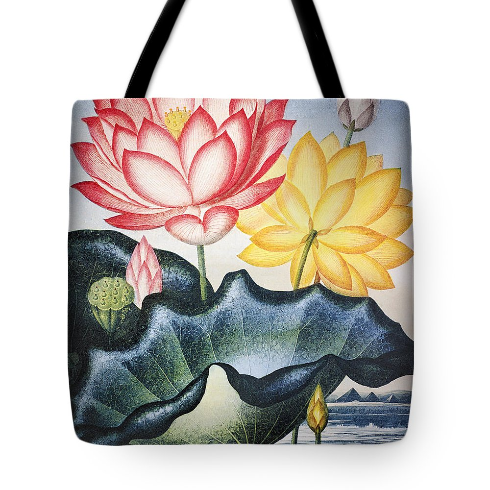 1804 Tote Bag featuring the photograph Thornton: Lotus Flower by Granger