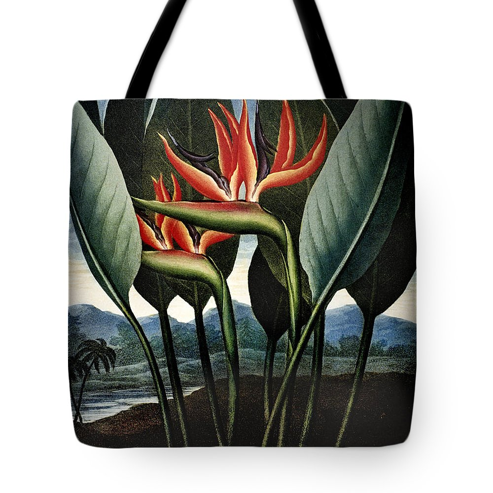 1804 Tote Bag featuring the photograph Thornton: Strelitzia by Granger