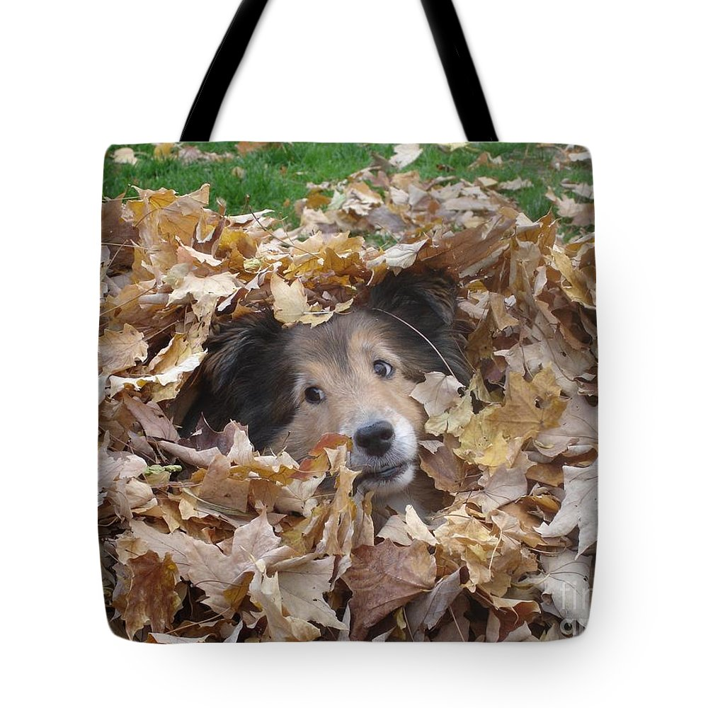Dog Tote Bag featuring the photograph Those Eyes by Shelley Jones