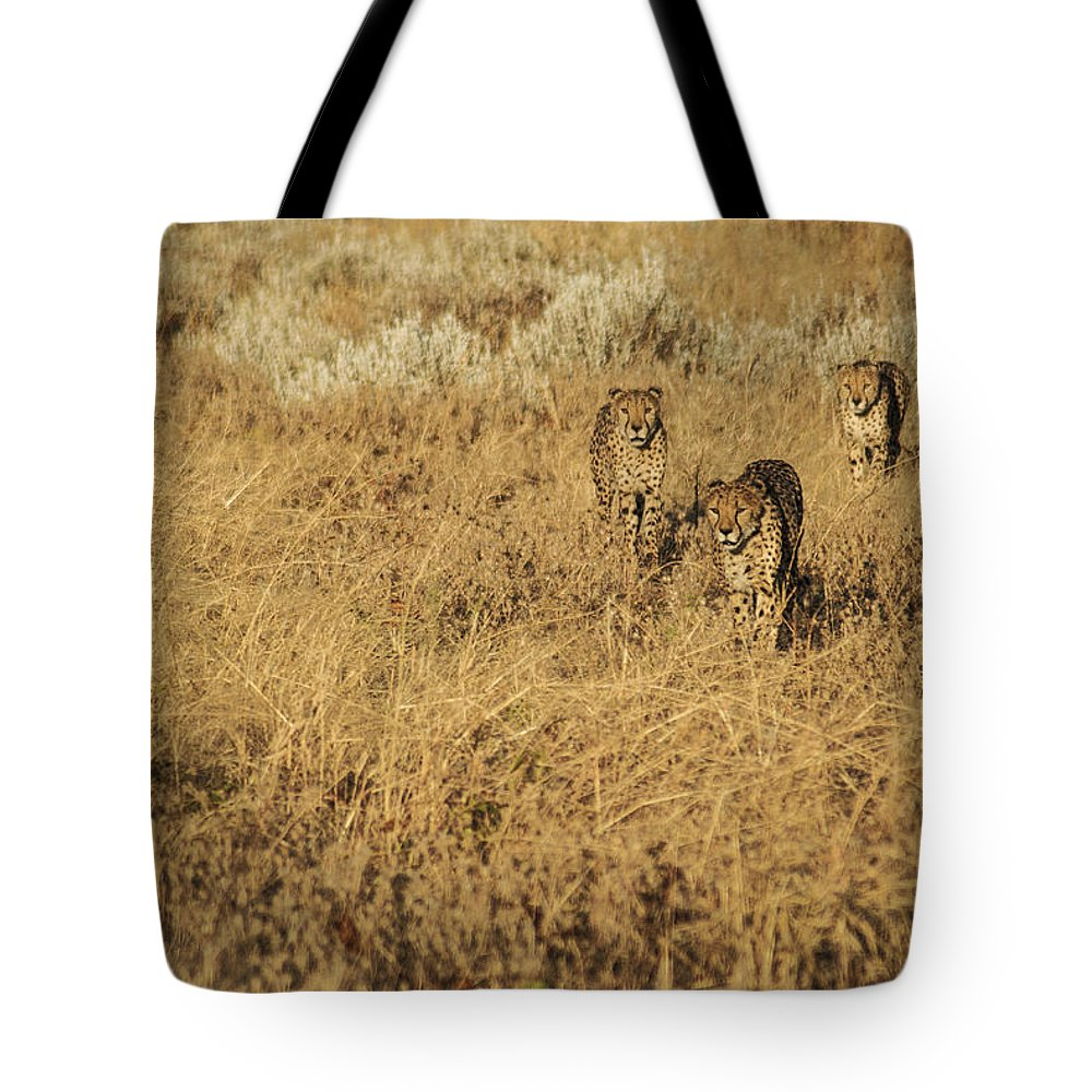 Cheetah Tote Bag featuring the photograph Three Cheetahs by Marc Levine