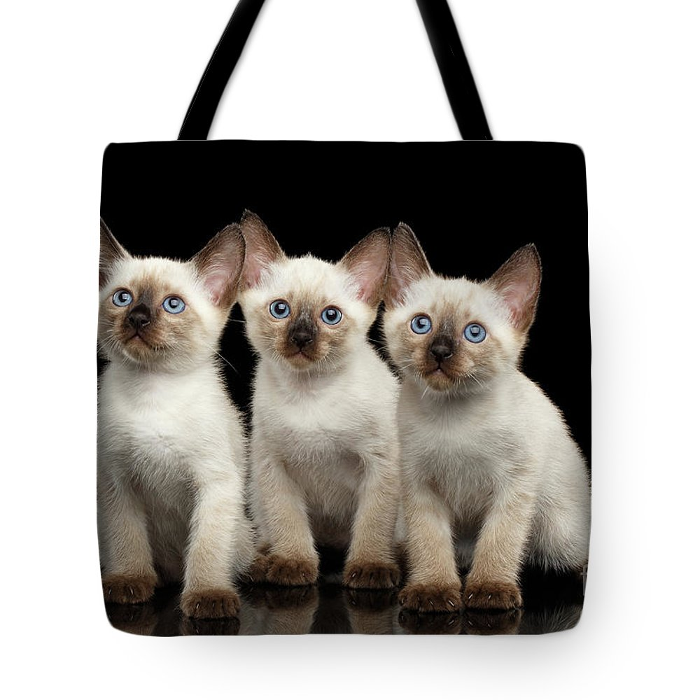 Funny Tote Bag featuring the photograph Three Kitty Of Breed Mekong Bobtail On Black Background by Sergey Taran