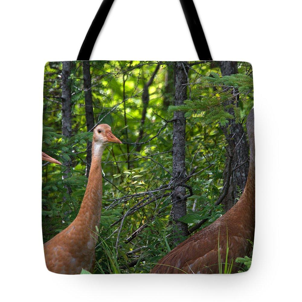 Seney National Wildlife Refuge Tote Bag featuring the photograph Three On A Walk by Linda Kerkau
